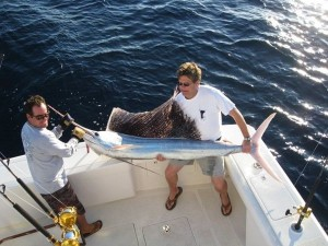 Albina Sailfish